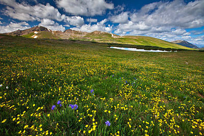 Flowers On The Divide Art Print by Darren  White