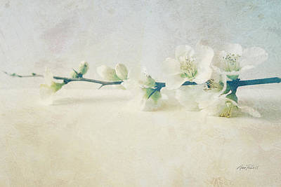 Photograph - flowers Pale Spring Blossom Two by Ann Powell