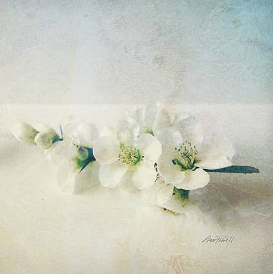 Photograph - flowers Pale Spring Blossoms  on Square   by Ann Powell