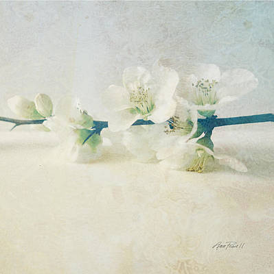 Photograph - flowers Pale Spring Blossoms on Square Two by Ann Powell