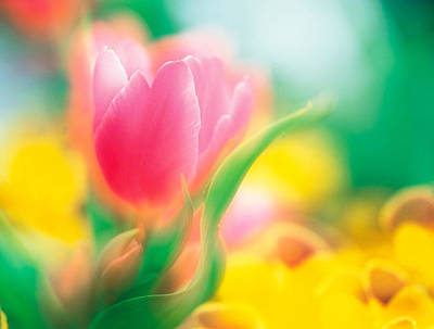 Designs In Nature Photograph - Flowers by Panoramic Images