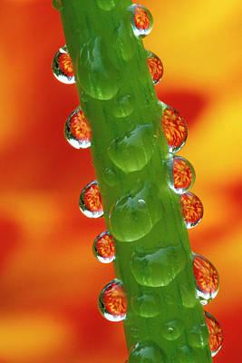 Flowers Reflected In Dew Drops Print by Jaynes Gallery