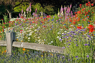 Foxglove Flowers Photograph - Flowers by Richard and Ellen Thane
