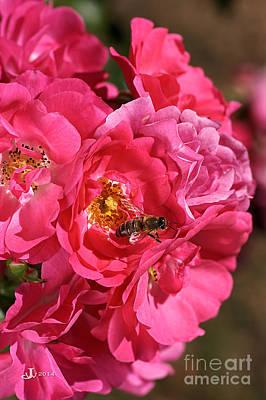 Flowers-roses-pink-bee Print by Joy Watson