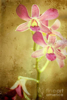 Flowers Art Print by Sophie Vigneault