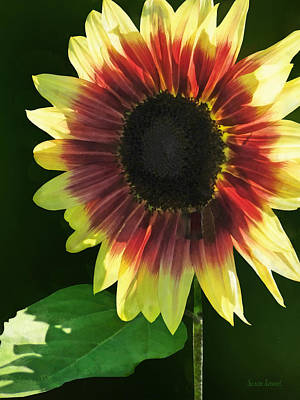 Colorful Photograph - Flowers - Sunflower Ring Of Fire by Susan Savad