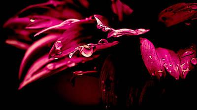 Flowers Tears Art Print by Jacki Pienta