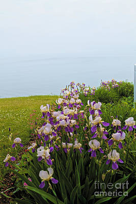 Photograph - Flowers To The Lake by William Norton