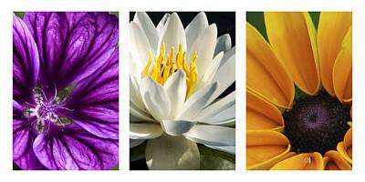 Flowers Triptych Print by Christina Rollo