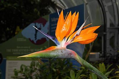 Flowers - Us Botanic Garden - 011311 Art Print