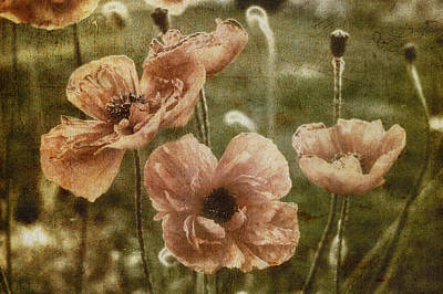 Photograph - Flowers - Vintage Poppies by Joann Vitali