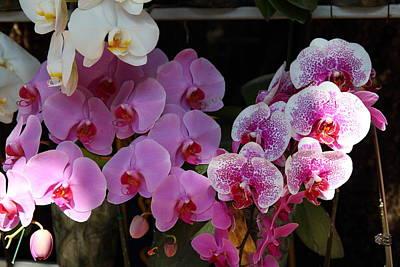 Phrathat Photograph - Flowers - Wat Phrathat Doi Suthep - Chiang Mai Thailand - 01131 by DC Photographer