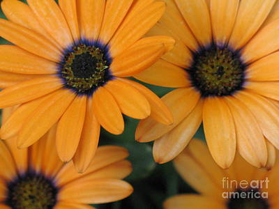 Photograph - Flowerworks by Sherry Lasken