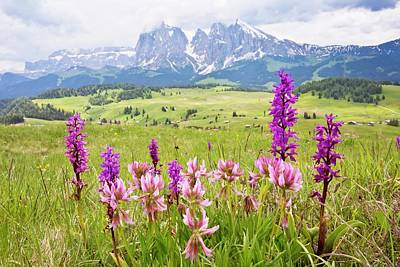 Italian Landscapes Photograph - Flowery Alpine Meadow by Bob Gibbons