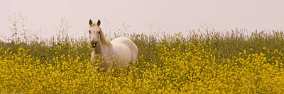 Flowery Horse Field Art Print by Sally Linden