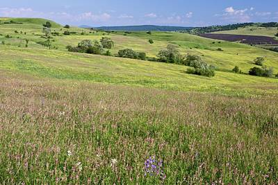Rattle Photograph - Flowery Pasture by Bob Gibbons