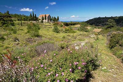 Chios Photograph - Flowery Scrubland by Bob Gibbons