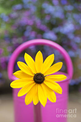 Colored Background Photograph - Flowery Watering Can by Tim Gainey