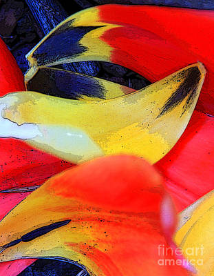 Photograph - Flowing Colors 2 by Jeanette French