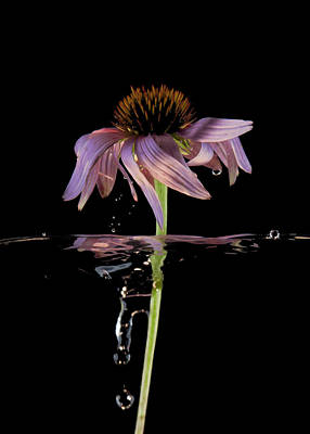 Photograph - Flowing Flower 10 by John Crothers