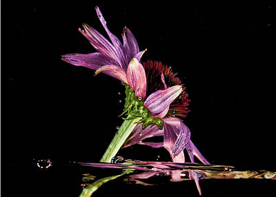 Photograph - Flowing Flower 2 by John Crothers