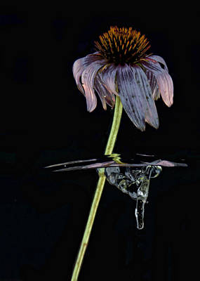 Photograph - Flowing Flower 3 by John Crothers