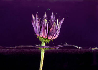 Photograph - Flowing Flower 4 by John Crothers