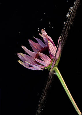 Photograph - Flowing Flower 5 by John Crothers