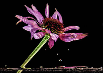 Photograph - Flowing Flower 6 by John Crothers