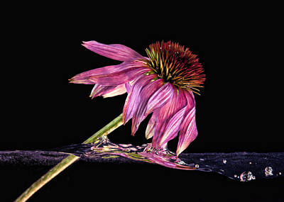 Photograph - Flowing Flower 7 by John Crothers