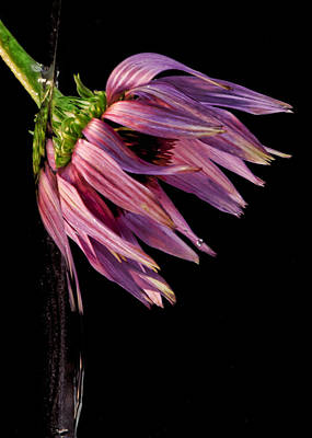 Photograph - Flowing Flower 8 by John Crothers