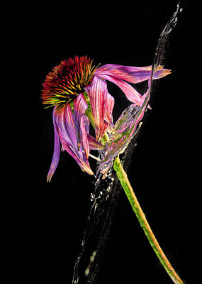 Photograph - Flowing Flower 9 by John Crothers