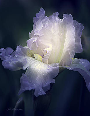 Photograph - Flowing Iris In White by Julie Palencia