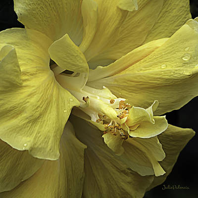 Photograph - Flowing Petals Of The Chinese Hibiscus by Julie Palencia
