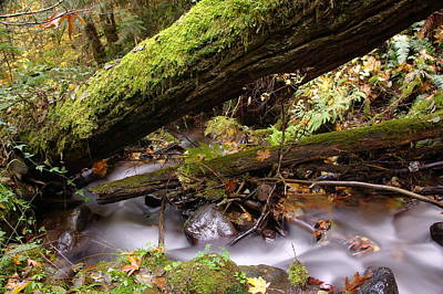 Fallen Leaf Photograph - Flowing Under A Log by Jeff Swan