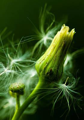 Photograph - Fluff And Flowers by Haren Images- Kriss Haren
