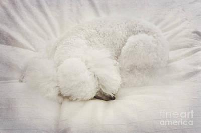Doggy Digital Art - Fluffy Ball by Svetlana Sewell