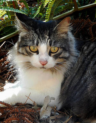 Photograph - Fluffy Cat by Pamela Walton