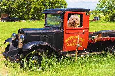 Photograph - Fluffy Dog In An Old Truck - V2 by Les Palenik