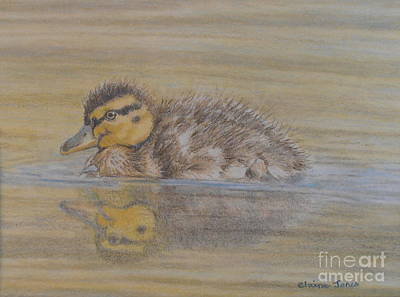 Baby Mallards Drawing - Fluffy Duckling by Elaine Jones