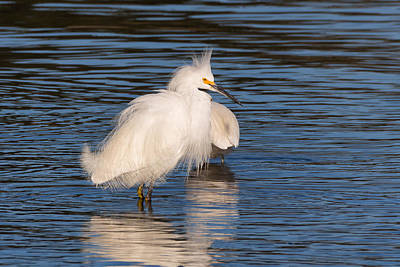 Photograph - Fluffy Egret by Kathleen Bishop