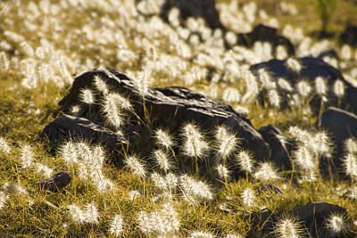 Fluffy Landscape In Bolivia Art Print by For Ninety One Days