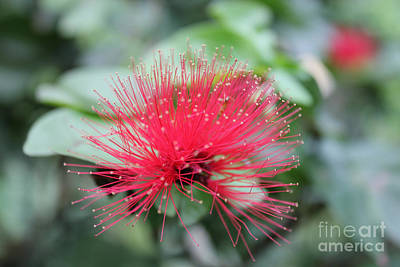 Art Print featuring the photograph Fluffy Pink Flower by Sergey Lukashin