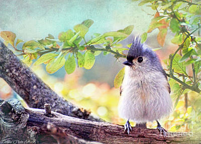 Tufted Titmouse Photograph - Fluffy Tufted Titmouse by Debbie Portwood