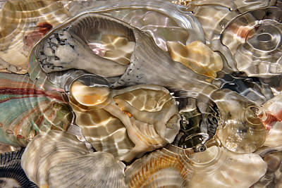 Photograph - Fluidity In Light by Leda Robertson