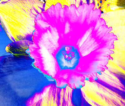 Photograph - Fluorescent Daffodil  by Shawna Rowe
