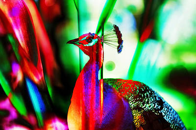 Photograph - Fluorescent Paradise Bird by Jenny Rainbow
