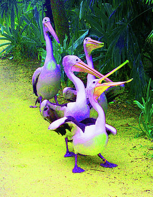 Photograph - Fluorescent Pelicans by Margaret Saheed