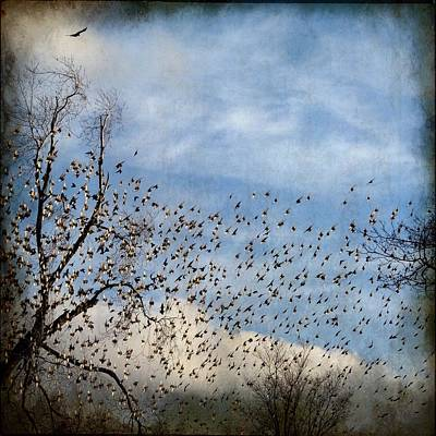 Flock Of Bird Photograph - Flutter by Gothicrow Images