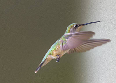 Flutter Digital Art - Flutter Hummer by Bill Tiepelman